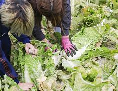 アミノ酸、ビタミン、糖及び有機酸の混合液による農地の土壌改善に関する研究
